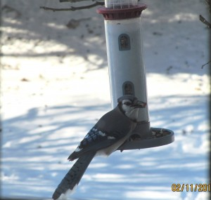 2014211birds 001crop