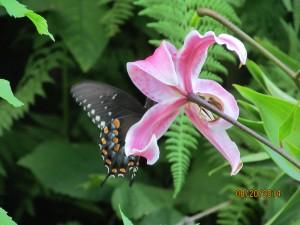 2014821butterflies 005