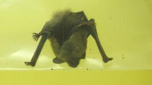 Bats007